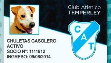 Clube da segunda divisão argentina oferece programa de sócio-torcedor para cães e gatos